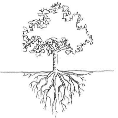 Kulstof lagres både i rødder, jord, visne blade, stående træ og i dødt træ.