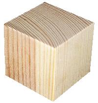 Tværsnit af skovfyr