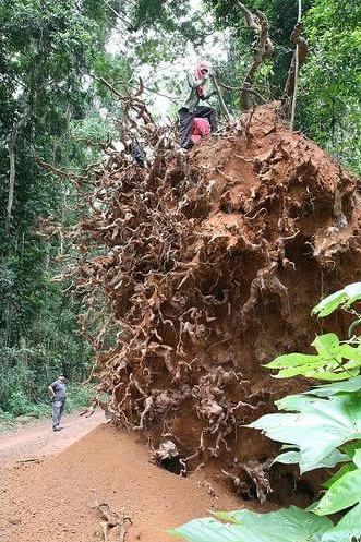 Udvælgelse i skoven (foto: www.ghostforest.org)
