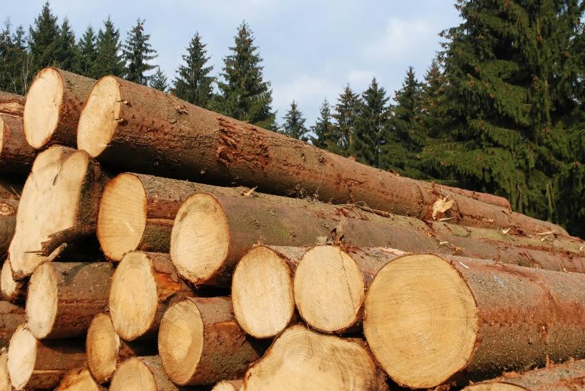 Tømmerstak i skoven
