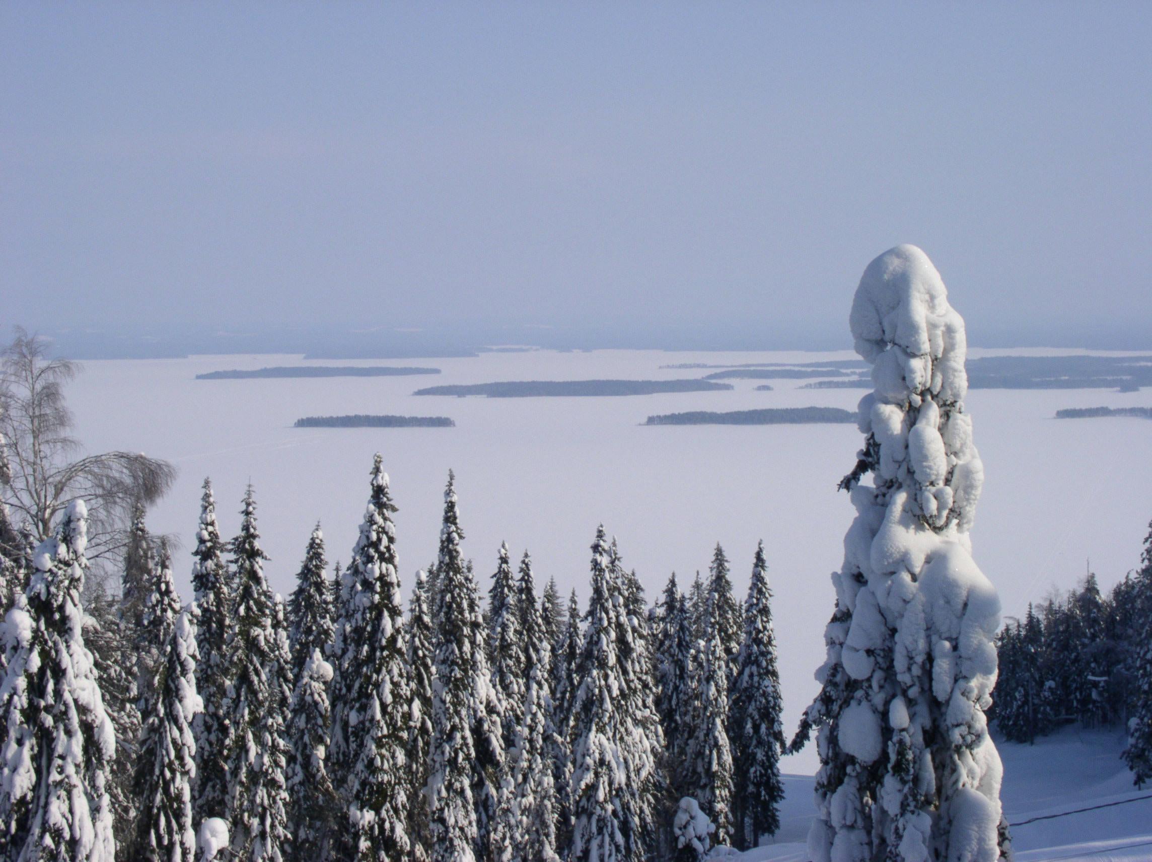 Nåleskov i det østlige Finland
