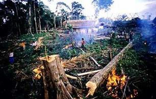 Afskovning i Indonesien