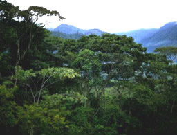 Tropisk regnskov i Indonesien