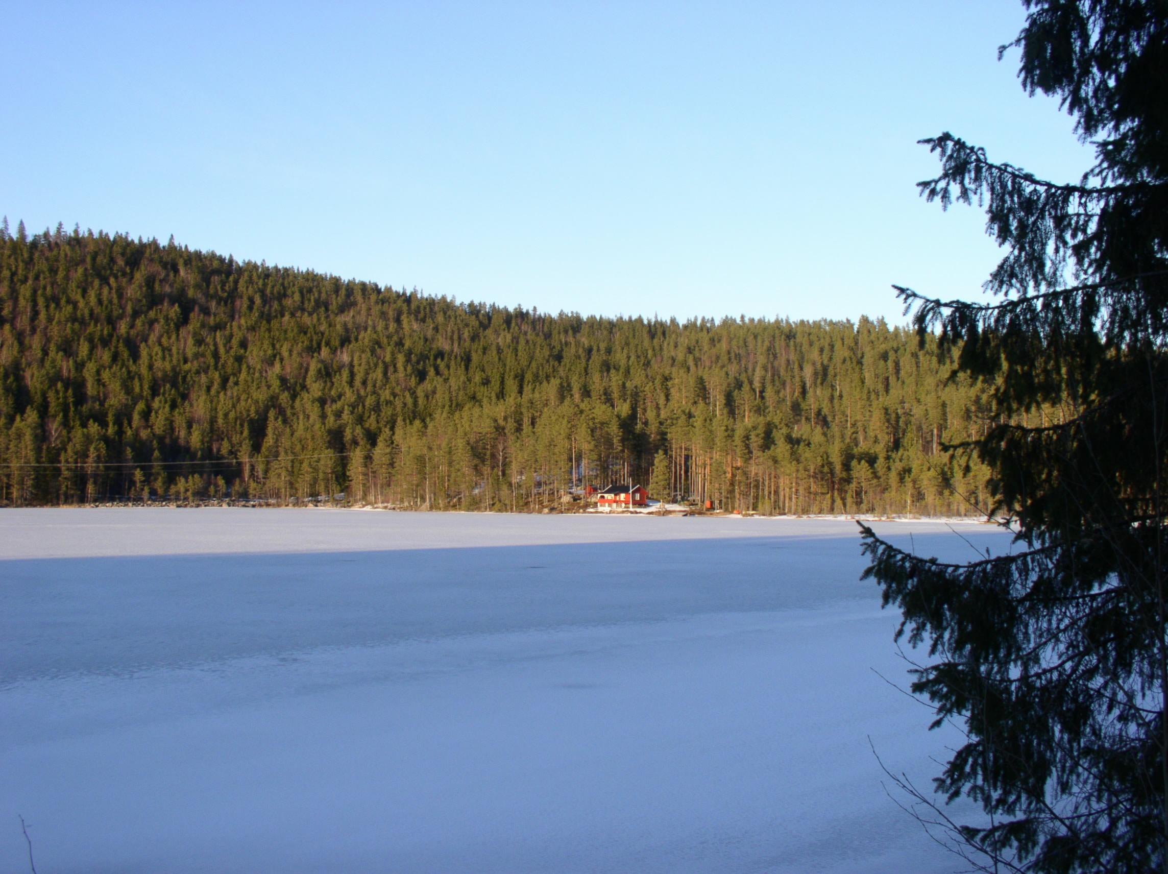 Svensk skovsø i nåletræsdomineret landskab