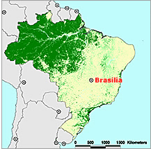 Brasiliens skovressourcer