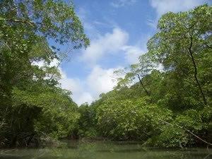 Amazonasfloden