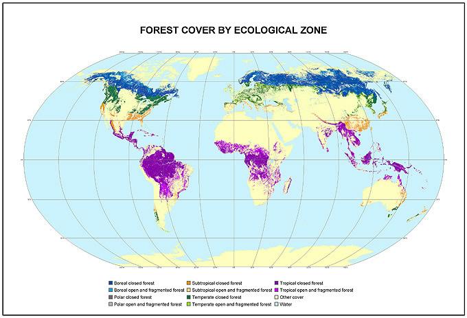 Verdens skove. Kilde FAO.