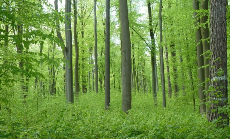 Certificering af skove