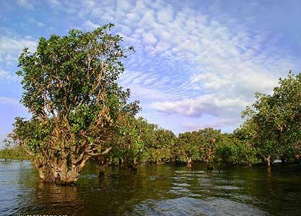 Mangrove-skov er en af Indonesiens forskellige skovtyper (Foto: Todd Adams)