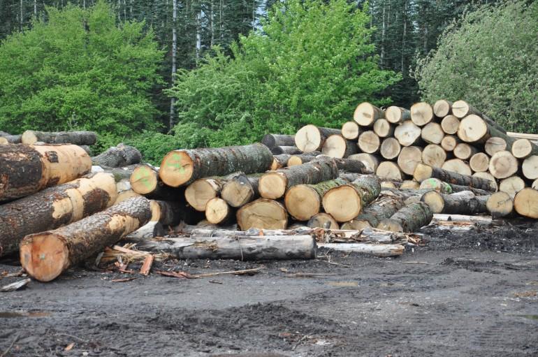 savet træ