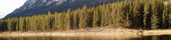 Canadisk skov