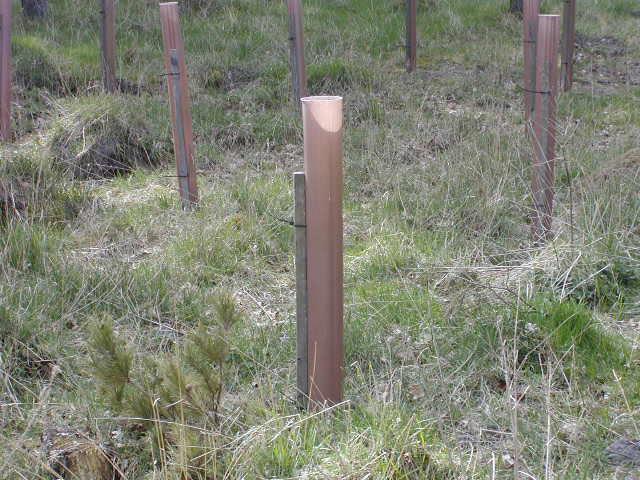 Plantning af skov (Foto: Janne Bavnhøj)