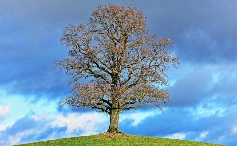 Hellige træer