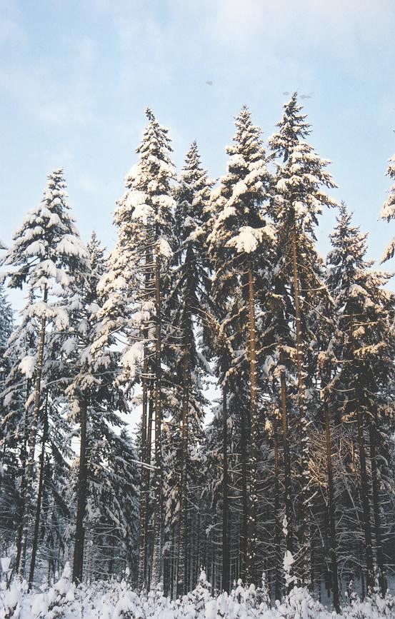 Der er stadig mere nåleskov end løvskov i Danmark, selvom andelen af nåletræ er faldet siden sidste skovtælling. (Foto: Søren Fodgaard)