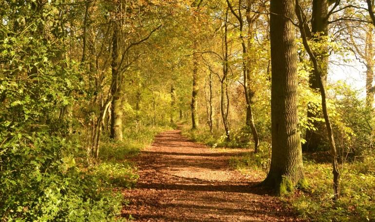 De danske skove bliver sundere