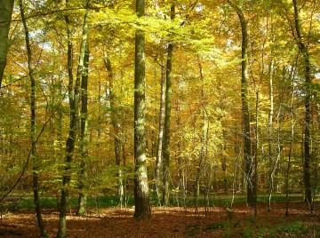 Hvorfor man ejer skov