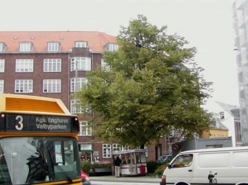 Lindeallé på Frederiksberg