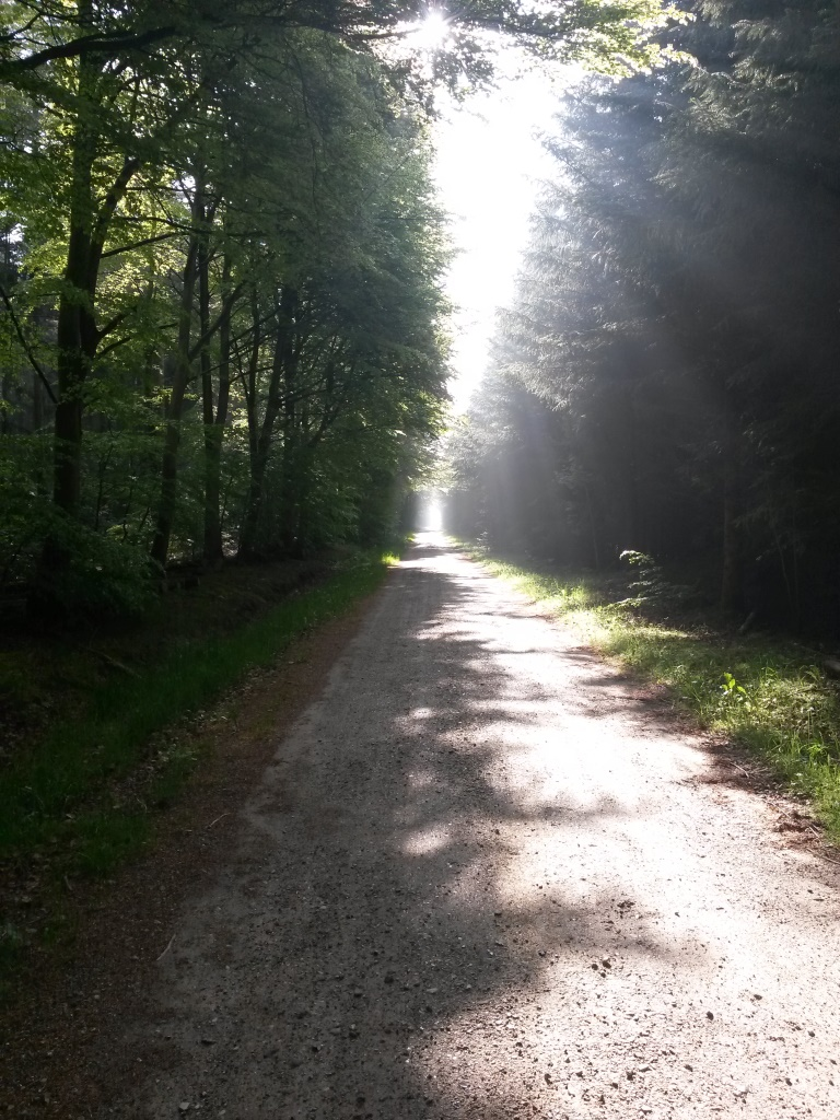 Skovve i modlys