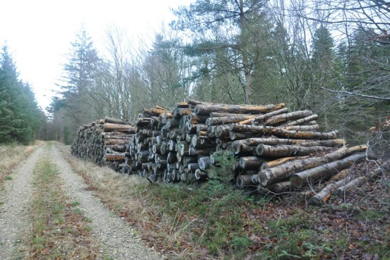 Tømmer ved skovvej