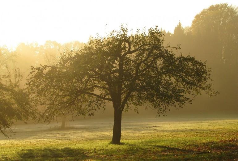 træ med menneske gener