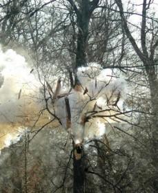Sprængning af træ. Naturstyrelsen