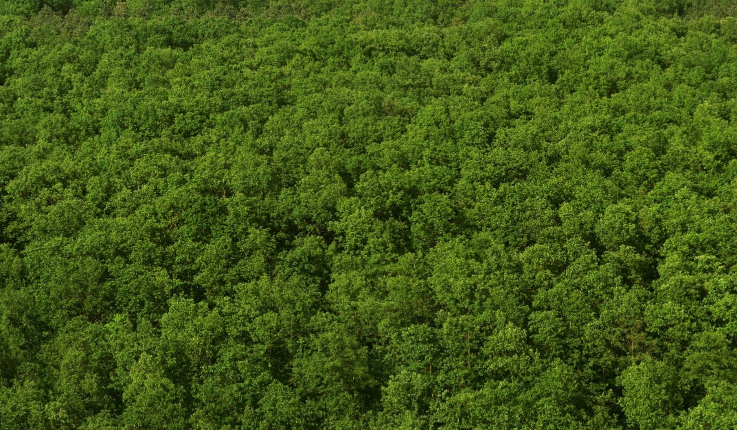 Certificeret tropisk træ - Global Timber AS