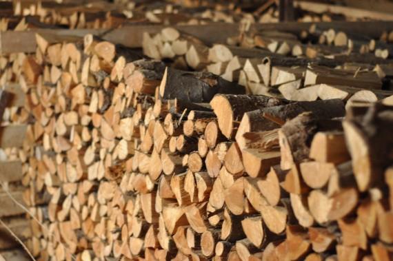 Brændværdien i et kg granbrænde er fem procent større end i et kilo bøgebrænde. Det skyldes indholdet af harpiks (Foto: Simon Auken Beck)