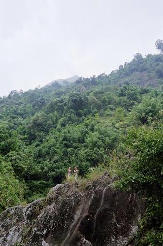 Tropisk skov i Vietnam. Foto: Janne Bavnhøj