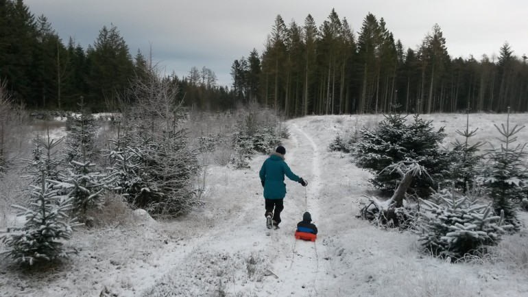 Slædetur i snedækket skov