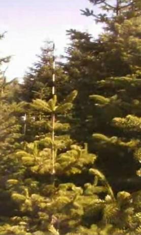 Juletræer byder op til dans