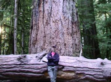 Verdens højeste træer