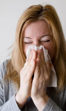 Allergi Birk