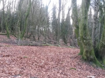 træer har smidt bladene
