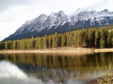 Skov i Rocky Mountains i Canada