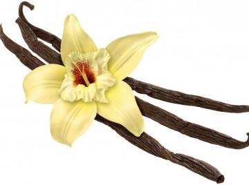 vanilje kan laves af træ