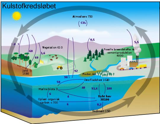 Kulstofkredsløb