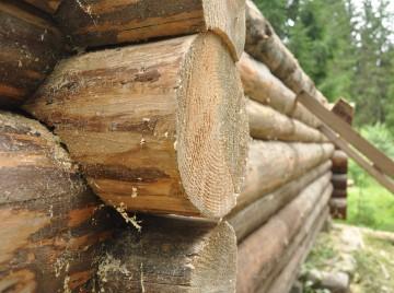 Bjælkehus af grantræ under opførsel