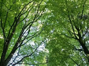 bæredygtig skovdrift