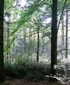 Bøgeskov