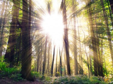 Skovene har vokseværk