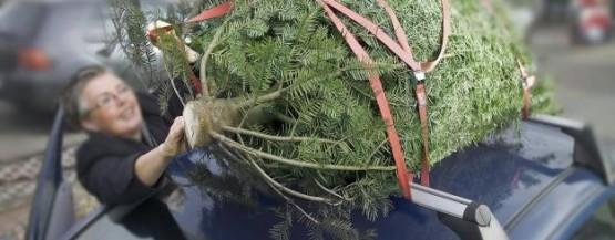 juletræ på tag