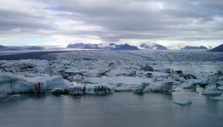forhistorisk skov fundet i Arktis