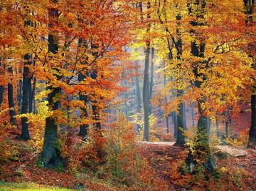 Skoven kan det hele