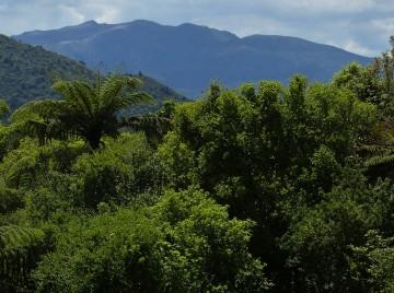 Verdens skove