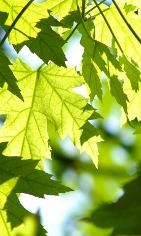 Blade i solskin - CO2-neutralitet