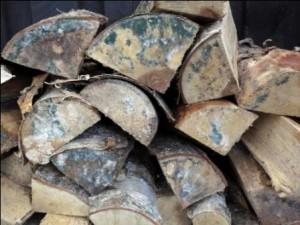 Birkebrænde med svamp (Foto: fedefotos.dk)