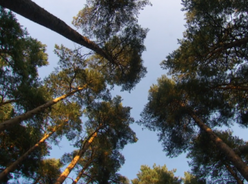 Træ...lyder videnskabeligt