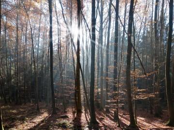 Gode træer bør på finansloven