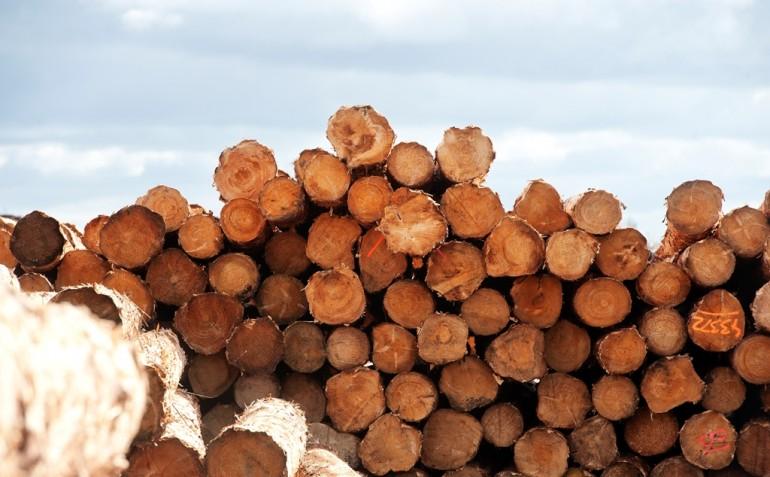 Rold Skov Savværk i Sabro