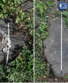 Stub af lindetræ kulsvamp
